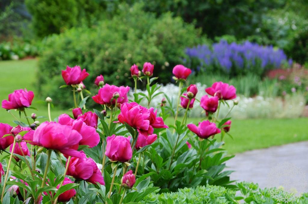 Romanttinen puutarha metsän reunassa – Kartanomallinen Kannustalo