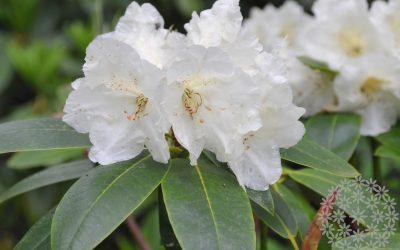 Mustila Arboretum – puutarharetkikohde