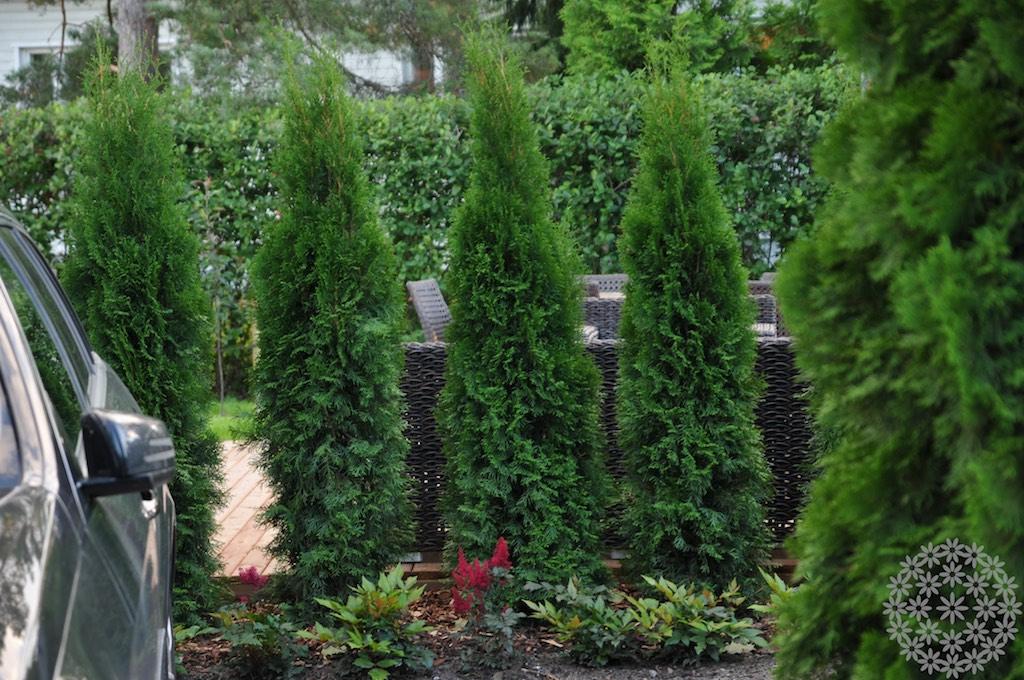 Puutarhan näkösuojat ja uusi oleskelualue